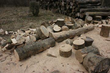 billig træfældning af træer